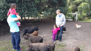 The girls were a little cautious about the piggies