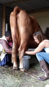 Dora, not-the explorer-milkmaid, showing me how its done...Apparently Rosie the cow was having a low suppy day. I was still breastfeeding then, so I totally empathized with her. #happenstoeveryone